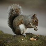 squirrel-eating-nut