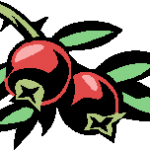 cranberry picture